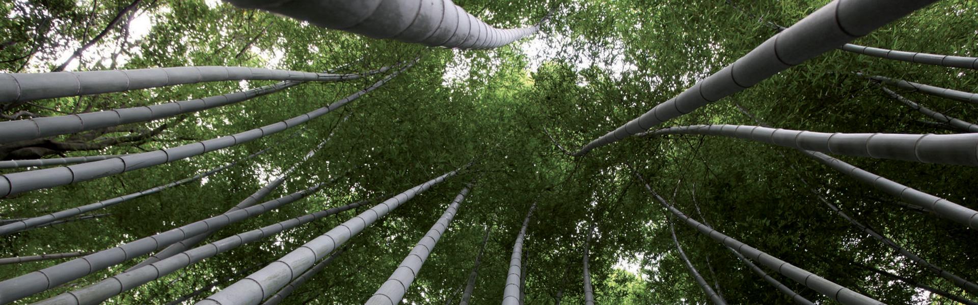 Pavimenti e rivestimenti Bamboo Moso